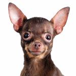 Список популярных собачьих питомников Санкт-Петербурга на 2020 год