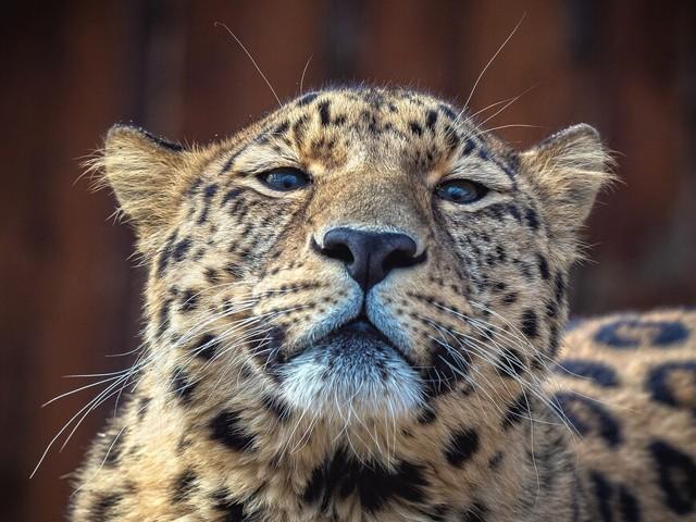 Рейтинг лучших гостиниц для животных в Красноярске 2020