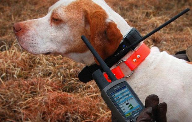 Список лучших электронных ошейников для собак
