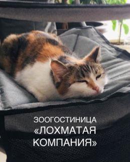Подбор лучших гостиниц для животных города Екатеринбурга